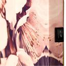 Wandbild LED 2er Pfingstrose