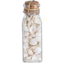 Dekomuscheln in Flasche